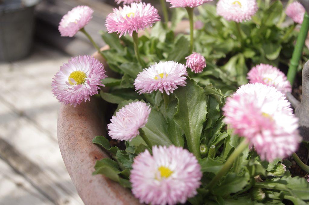 salon-flower