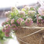 [花のある暮らし♪]春