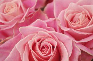 innternational-roses-gardening-show