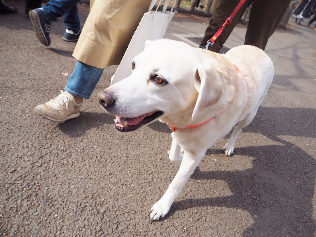 pet-dog-sonia