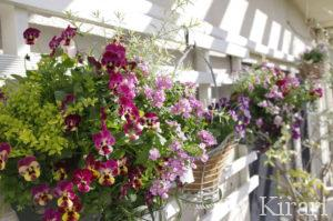 サロンのテラスに咲くお花達
